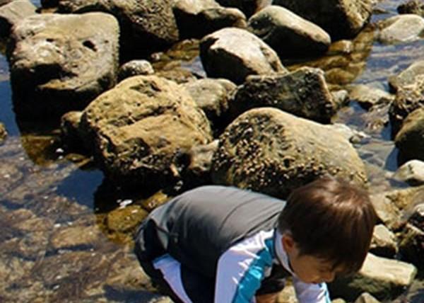 Ricketts Point Marine Sanctuary