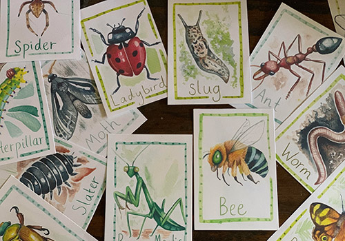 Australian Bug Hunt Cards