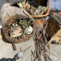 How to build a native bee hotel with kids