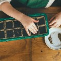 Sowing Seeds with Kids