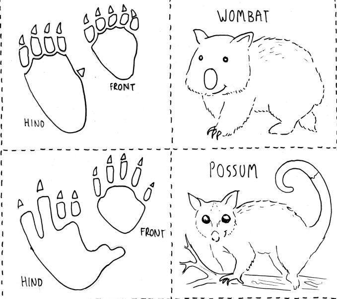 australian animal tracks footprints printable